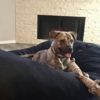 adoption_dog_whiskey_home